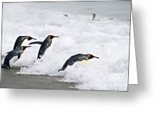 King Penguins Greeting Card