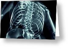 Bones Of The Upper Body Greeting Card
