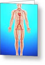 Human Arteries Greeting Card