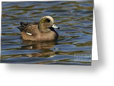 American Widgeon Greeting Card