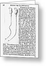Anton Van Leeuwenhoek Greeting Card