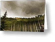 Aspen Trees In Vail Greeting Card