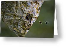 Bald-faced Hornet Nest Greeting Card