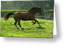 Bay Horse Greeting Card