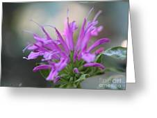 Bee Balm From The Panorama Mix Greeting Card