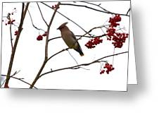 Bohemian Waxwing Greeting Card