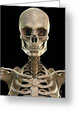Bones Of The Head And Upper Thorax Greeting Card