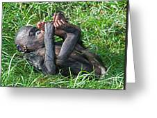 Bonobo Baby Greeting Card