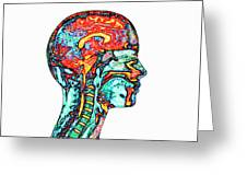 Brain And Spinal Cord Greeting Card