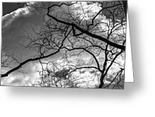 Branches And Clouds Greeting Card