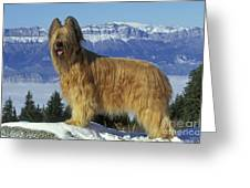 Briard Dog Greeting Card by Jean-Michel Labat
