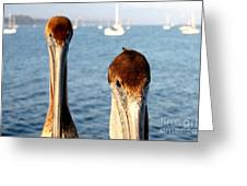 California Pelicans Greeting Card