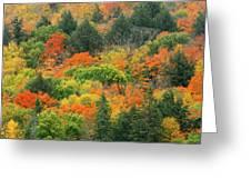 Canada, Ontario, Algonquin Provincial Greeting Card