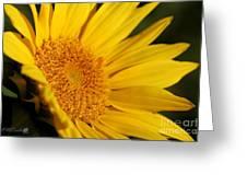 Chipmunk's Peredovik Sunflower Greeting Card