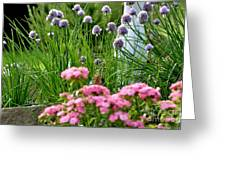Chives In Bloom Greeting Card