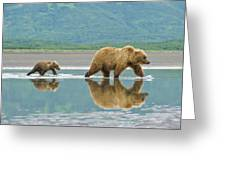 Coastal Brown Bear Pictures Greeting Card