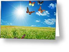 Colorful Buttefly Spring Field Greeting Card
