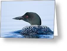 Common Loon Greeting Card by Michael Cummings
