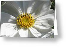 Cosmos Named Sensation Alba Greeting Card