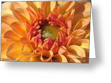Dahlia Named Brandon James Greeting Card