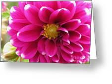 Dahlia Named Edinburgh Greeting Card