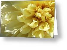 Dahlia Named Kelvin Floodlight Greeting Card