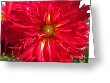 Dahlia Named Mingus Erik Greeting Card