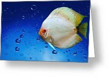 Discus Fish Greeting Card
