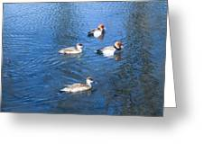4 Duck Pond Greeting Card