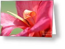 Dwarf Canna Lily Named Shining Pink Greeting Card