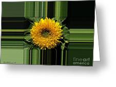 Dwarf Sunflower Named Teddy Bear Greeting Card