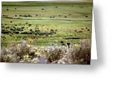 Environmental Tierra Del Fuego -- Greeting Card