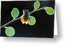 Exotic Frogs Greeting Card