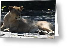 Female Lion Greeting Card