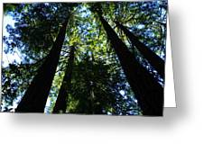 Giant Redwoods Greeting Card