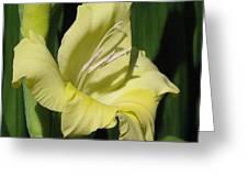 Gladiolus Named Nova Lux Greeting Card
