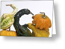Gourds And Pumpkins Greeting Card