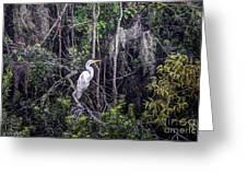 Heron Colors Greeting Card