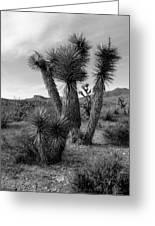 Joshua Tree Utah Greeting Card
