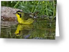 Kentucky Warbler Greeting Card