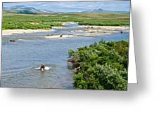 4-lay Of The Land Many Grizzly Bears In Moraine River In Katmai National Greeting Card