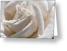 Long-stemmed White Rose Greeting Card