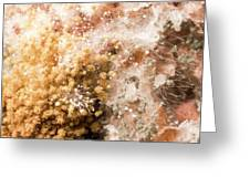 Mould On Bread Greeting Card
