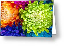 Multicolored Chrysanthemums  Greeting Card