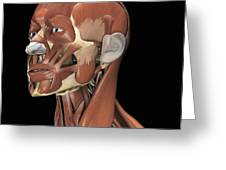 Muscles Of The Head And Neck Greeting Card