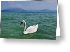 Mute Swan. Sirmione. Lago Di Garda Greeting Card
