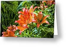 Orange Lilium Greeting Card