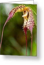 Orchid From Finca Dracula Greeting Card
