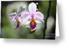 Orchids Dance Greeting Card