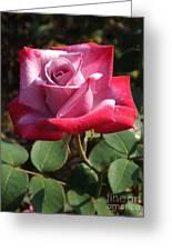 Paradise Rose Greeting Card